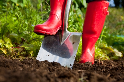 Gardener in red wellington boots digging over soil in an organic vegetable garden with a stainless steel garden spade.
